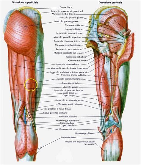dolore ginocchio interno corsa la contrazione muscolare running for