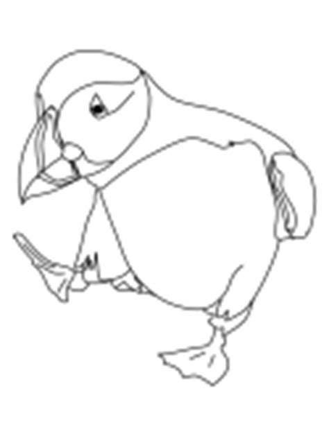 puffin bird coloring page puffins coloring pages