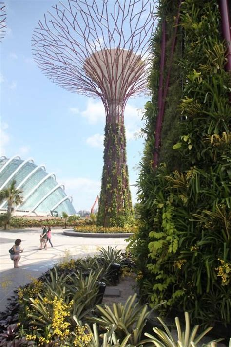 Singapore Vertical Garden 17 Best Images About Vertical Gardens Of Various Types On