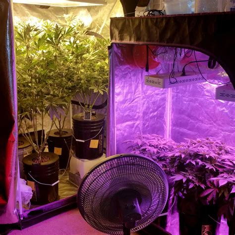 grow tent with led lights simplest guide to growing cannabis grow easy
