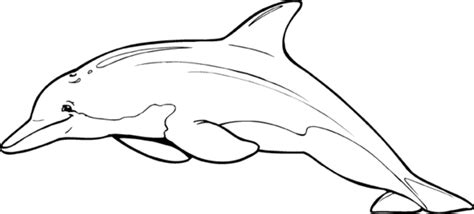 large dolphin coloring page free coloring pages of of delfin