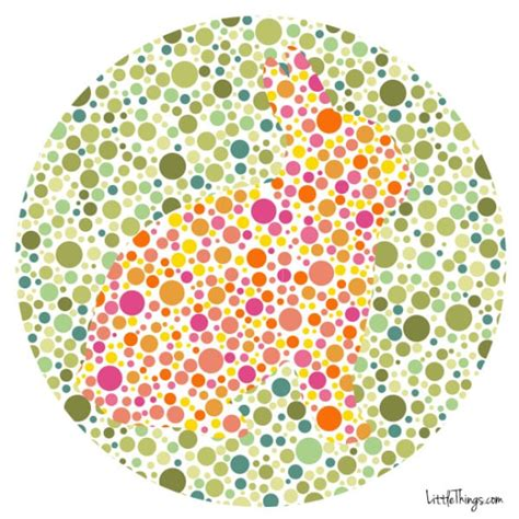 are all animals color blind 1 in 12 and 1 in 200 can t see color could you