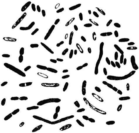 clipart etc bacteria clipart etc a5xwtt clipart suggest