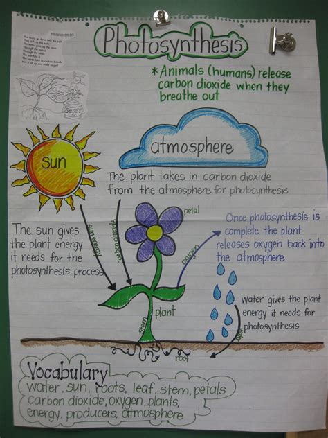 biography anchor chart fifth grade ideas pinterest staar review anchor chart for 5th grade science
