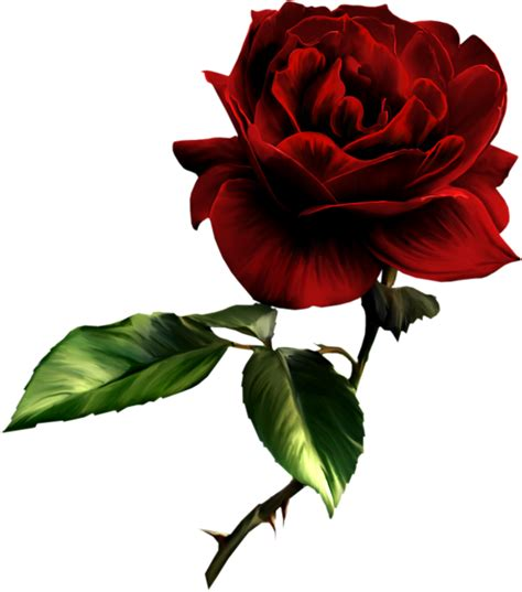 printable rose images roses images free cliparts co