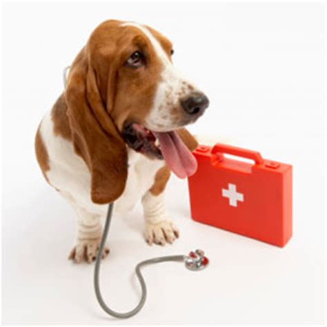 how to palpate for puppies aid kit for dogs how to an ailing howstuffworks