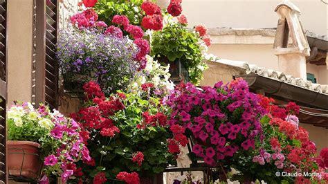terrazze fiorite foto spello balconi e vicoli fioriti 2014 hd