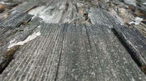 Morsches Holz Ausbessern morsches holz ausbessern