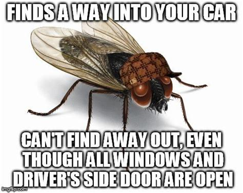 Fly Meme - bbyk5 jpg 490 215 391 memes quotes and stuff pinterest