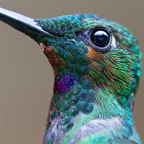 20 vivid hummingbird close ups reveal their incredible