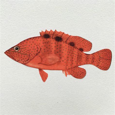 aquarium wall stickers tropical fish aquarium wall sticker set by chameleon wall