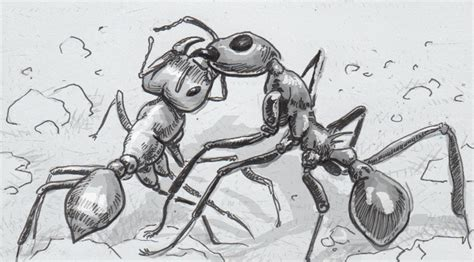 Combat Ant the clashes and combat of antagonistic ants a new