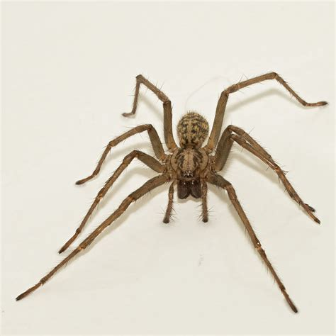 spider images is it ok to throw house spiders outside