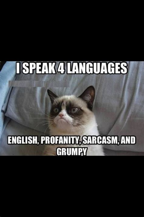 Sarcastic Cat Meme - 543 best jokes for a good laugh grumpy cat images on