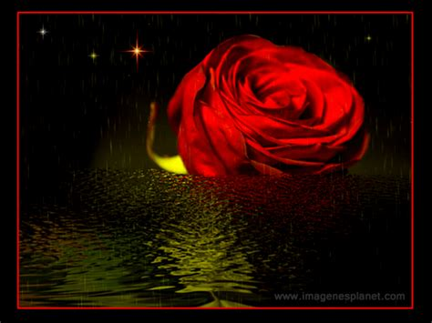 imagenes romanticas animadas con movimiento rosas animadas con movimiento roses animated motion