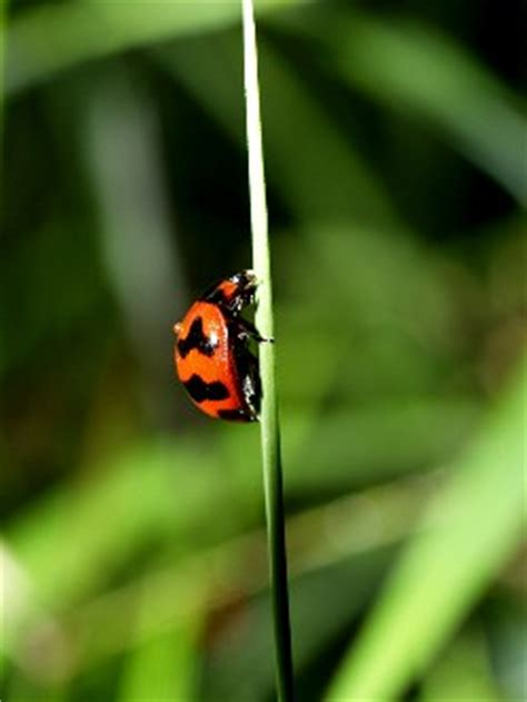 eco friendly garden  green approach  tools pests