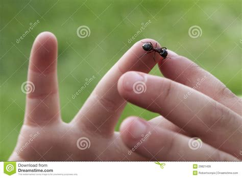closeup  ant crawling  toddlers hand stock image