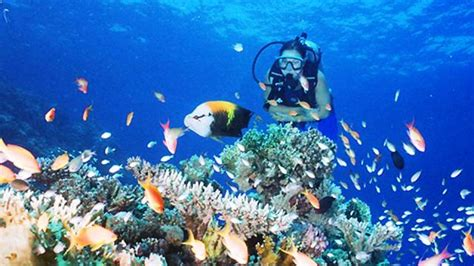 best place to dive 25 best places to go scuba diving