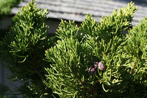 rock garden branford ct summer hill nursery ct