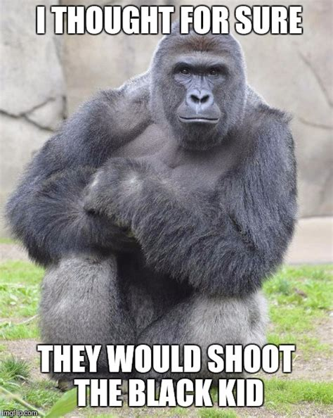 Gorilla Meme - internet meme demolition derby the gorilla edition