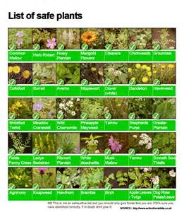 Rabbit Hutches Uk Safe Plants