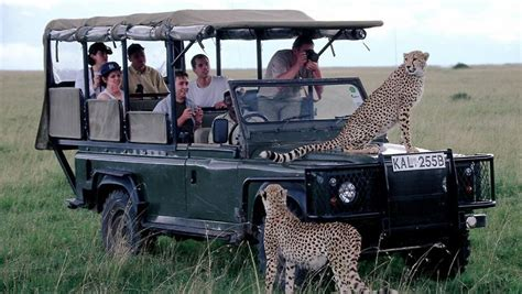Polieren Reis by Safari Statt Sextourismus Kenia Poliert Image Auf N Tv De