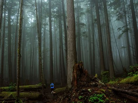 300 Feet To Meters by Walking Through The Rain Forest Of Vancouver Island Canada Sun Refugee