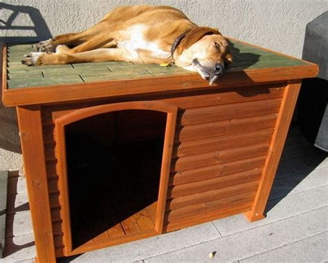 wood dog house kit creative dog house design ideas 31 pictures removeandreplace com