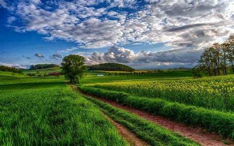 The Field across the field 3000 x 1875 nature photography