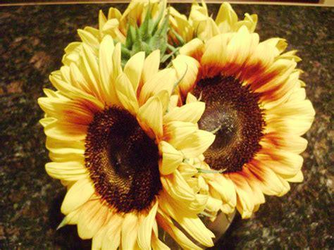 fiori australiani per dimagrire dimagrire con la floriterapia mondobenessereblog
