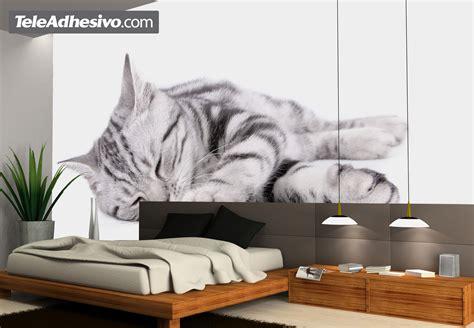 cat wall murals cat
