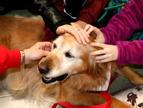 how to therapy dogs tips to become a therapy trainer the modern trainer
