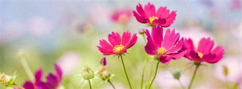 imagenes flores extraordinarias portadas para facebook con imagenes de hermosas flores y