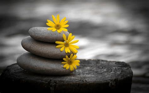 descargar imagenes zen gratis flores piedras zen guijarros 2560x1600 fondo de pantalla
