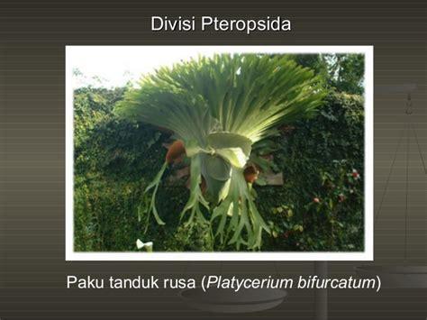 kingdom plantae dunia tumbuhan dunia tumbuhan kingdom plantae