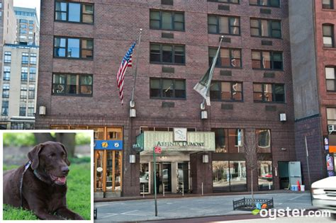 friendly hotels nyc westminster kennel club show special pet friendly hotels in new york city oyster