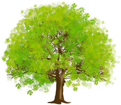 tree images clip rainforest clipart narra tree pencil and in color