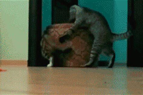 imagenes gif graciosas algunos gifs animados con gatos locos