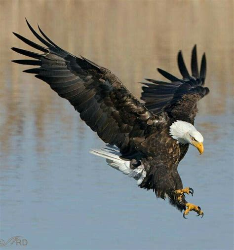 94 best fly like an eagle images on pinterest beautiful