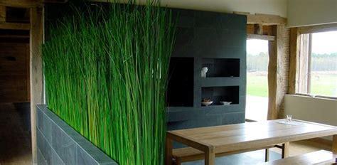 piante alte da vaso oltre 25 fantastiche idee su arredamento piante da interni
