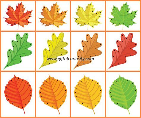 printable leaves for sorting fall leaf lacing cards free printable gift of curiosity