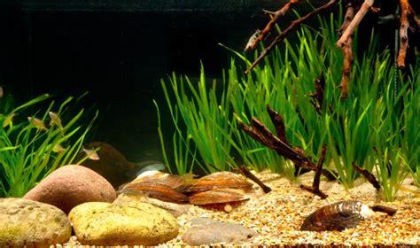 set   taiwanese biotope aquarium practical
