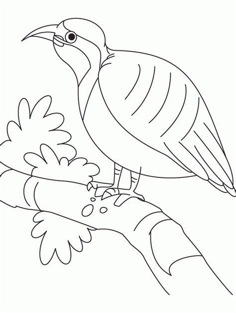 vulture coloring page az coloring pages