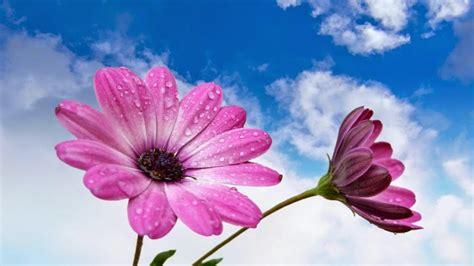 gambar bunga cantik  indah gambar top