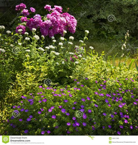 Summer Garden Plants by Summer Garden Stock Photos Image 30611383