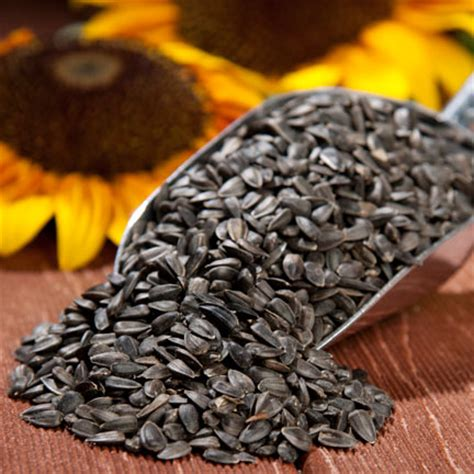 bird seeds drs foster smith black sunflower seed