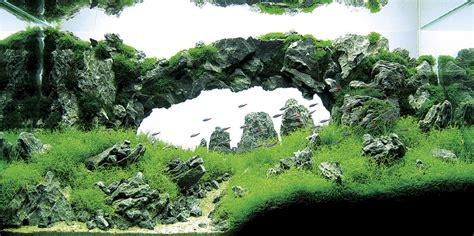 aquascapes aquarium takashi amano joe blogs