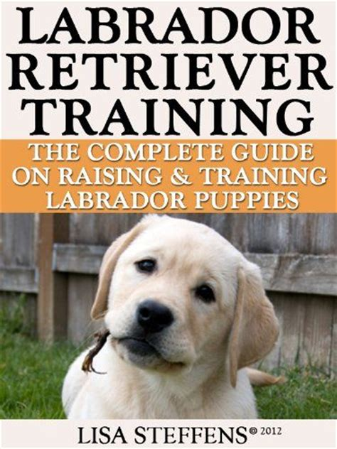 labrador puppy care 125 best chocolate labrador images on