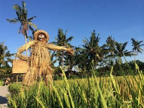 film hantu orang orangan sawah manfaat jerami padi oman dan damen