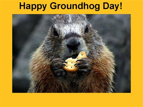 groundhog day and happy day an early is on the way according to groundhog